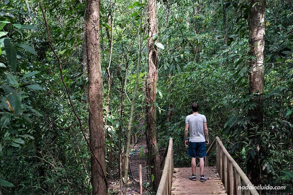 Camino por un puente de madera en el parque nacional de Manuel Antonio (Costa Rica)