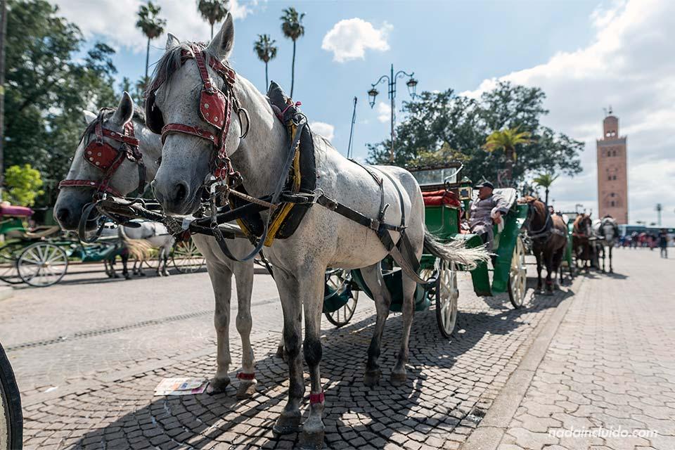 Carro de caballos en la Plaza de Yamaa el Fna de Marrakech (Marruecos)