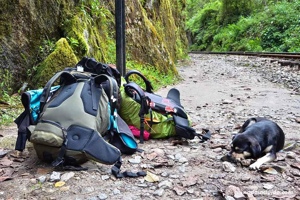 Un perro descansa junto a unas mochilas en el camino Hidroeléctrica a Machu Picchu (Perú)