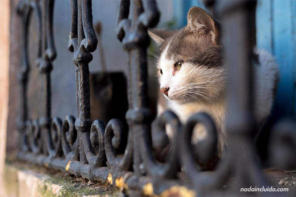 Gato en los jardines andaluces de Rabat (Marruecos)