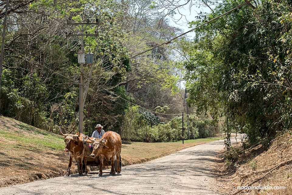 Carreta tirado por bueyes en la carretera junto al pueblo de Tárcoles (Costa Rica)