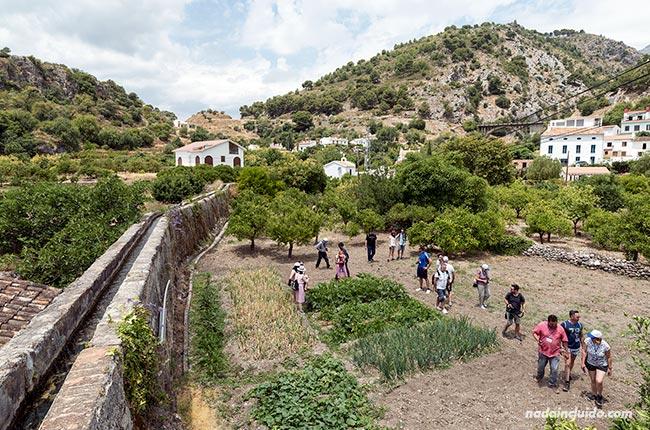 Campos en el valle de Jorox (Málaga)