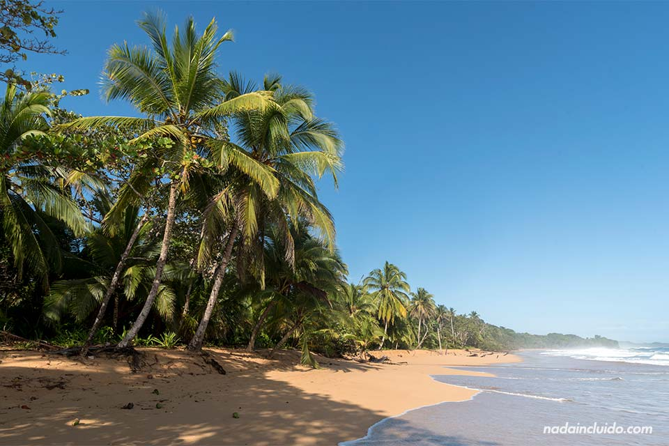 Playa Bluff en isla Colón, archipiélago de Bocas del Toro (Panamá)
