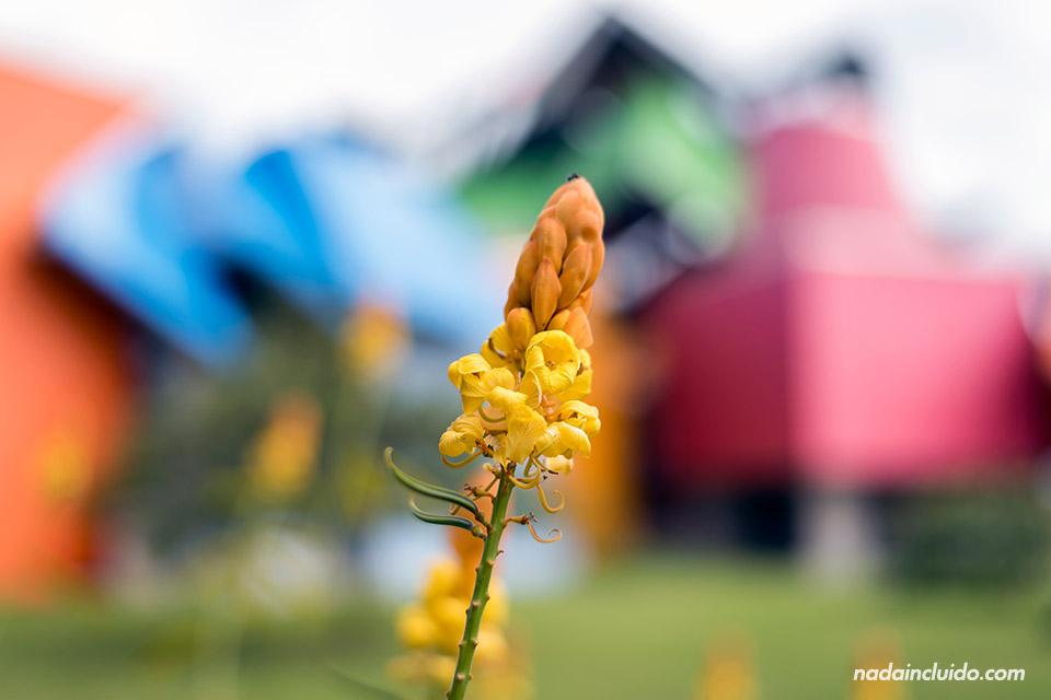 Detalle de una flor en el biomuseo de ciudad de Panamá
