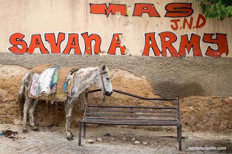 Un burro en los alrededores de la medina de Fez (Marruecos)