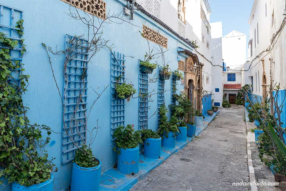 Calle con plantas en la Kasbah de los Udayas de Rabat (Marruecos)