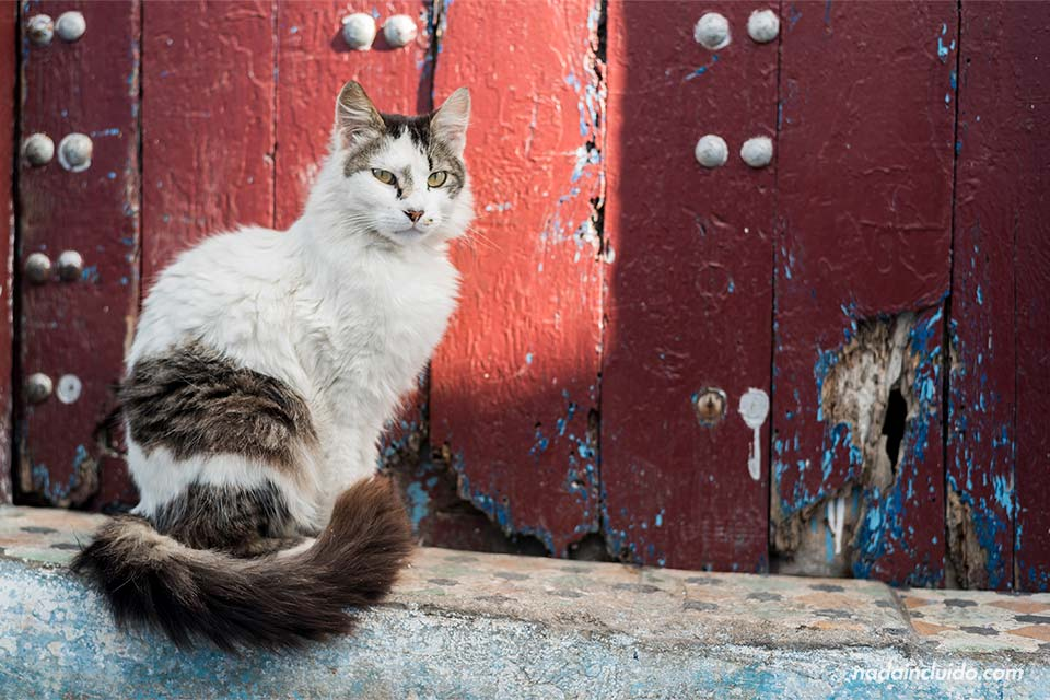 Gato en la puerta de una casa de la Kasbah de los Udayas de Rabat (Marruecos)