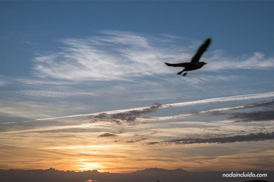 Una gaviota vuela durante el atardecer, Essaouira (Marruecos)