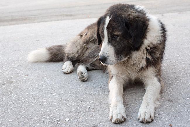 Perro en la estación de autobuses de Krusevo (Macedonia)