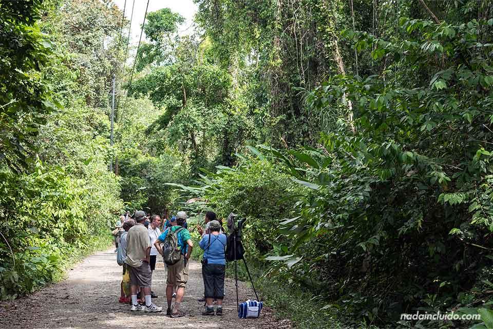 Grupo de turistas recibiendo la explicación de un guía en el Parque Nacional de Manuel Antonio (Costa Rica)