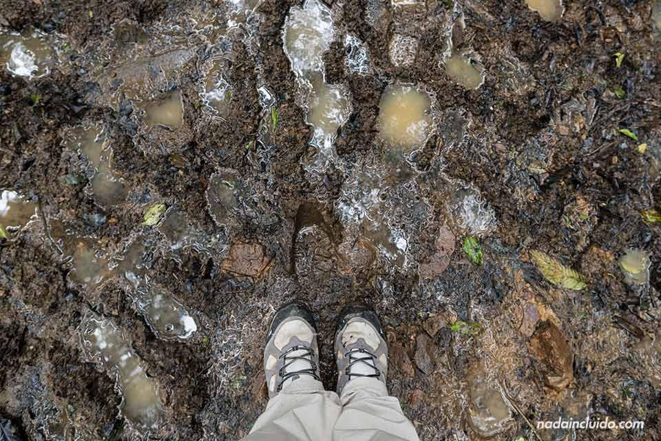 Paseando por el suelo embarrado del Bosque Nuboso de Monteverde (Costa Rica)