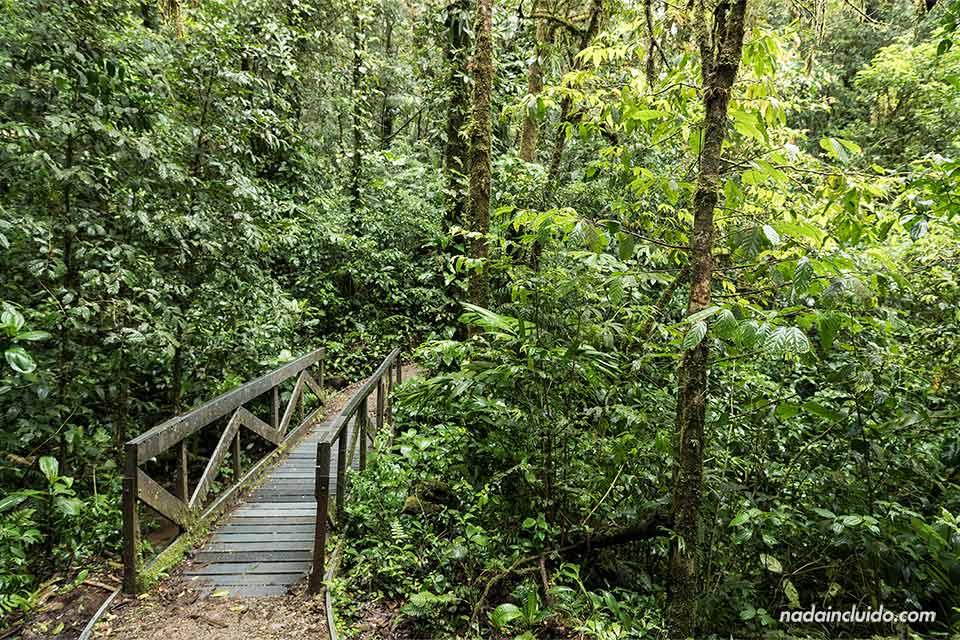 Puente en el bosque nuboso de Monteverde (Costa Rica)
