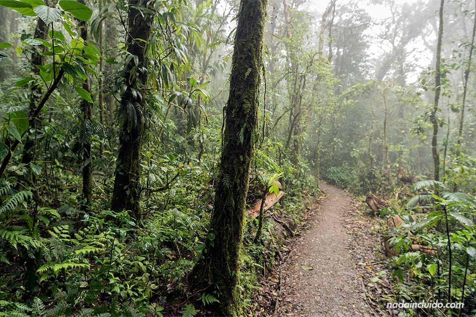 Niebla en el interior del Bosque Nuboso de Monteverde (Costa Rica)