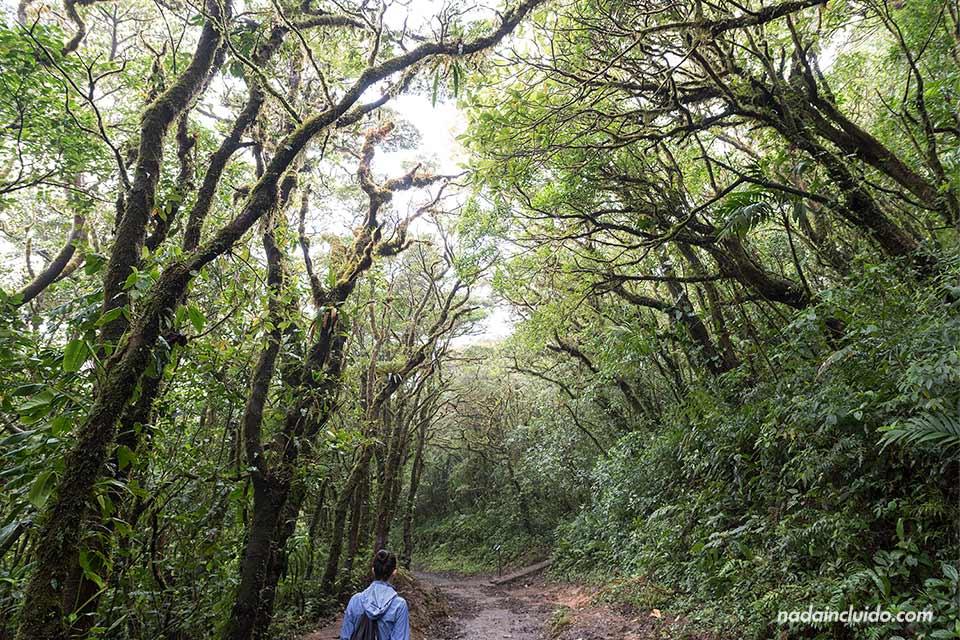 Paseando por un sendero del Bosque Nuboso de Monteverde (Costa Rica)