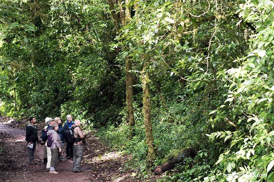 Turistas recorriendo el Bosque Nuboso de Monteverde (Costa Rica)