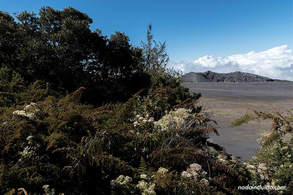 Vegetación en el Parque Nacional del Volcán Irazú (Costa Rica)