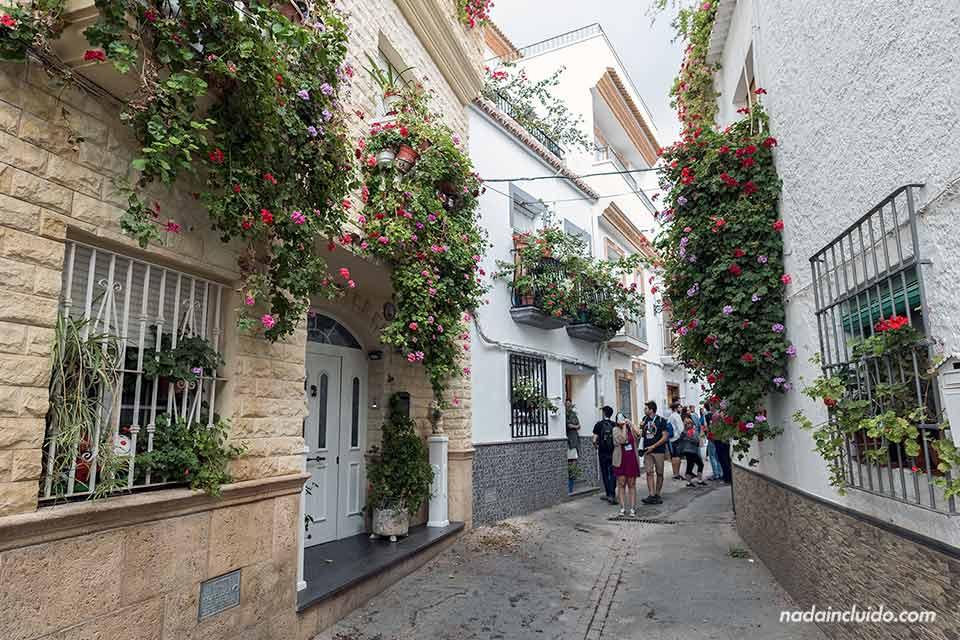 Flores en las calles de Alcolea (Almería)