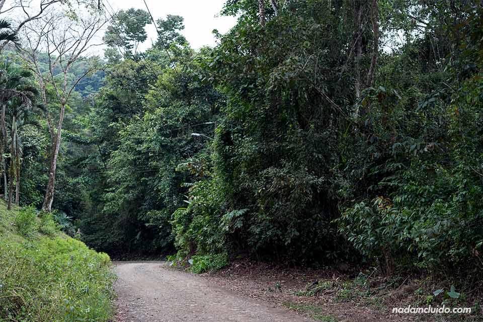 Sendero a Cascada el Pavón (Costa Rica)