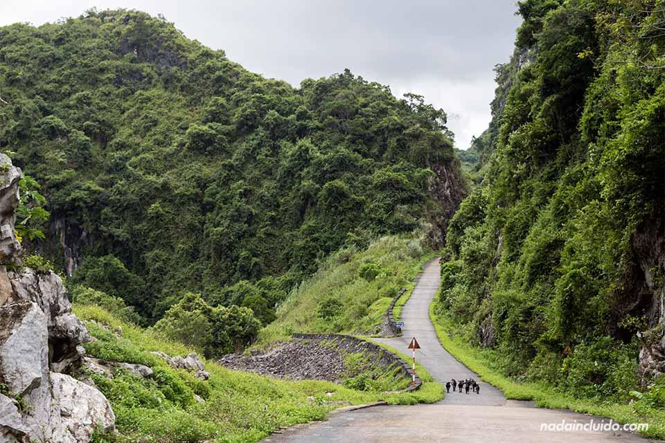 Carretera en la aldea de Viet Hai, Bahía de Lan Ha (Vietnam)