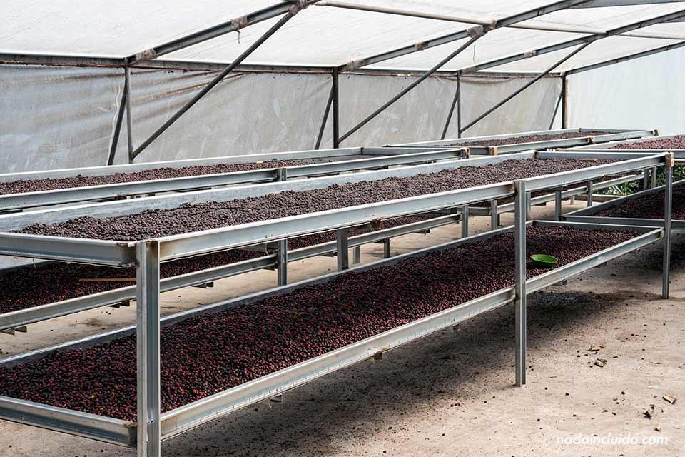 Secadores de café en Elida Coffee State, en Boquete (Panamá)