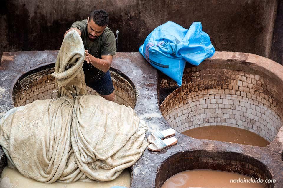 Trabajador de la curtiduría Chouwara de Fez (Marruecos)