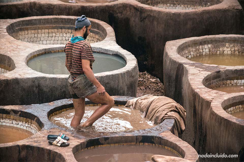 Trabajando en la curtiduría Chouwara de la medina de Fez (Marruecos)