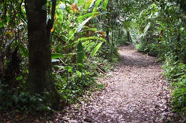 Sendero del Parque Nacional de Tortuguero (Costa Rica)