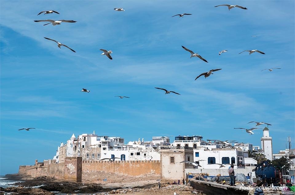 Gaviotas sobre Essaouira (Marruecos)