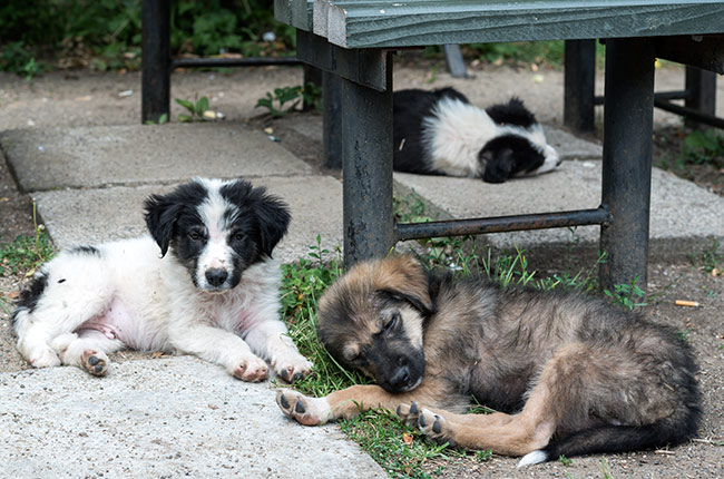 Cachorros de perro en el Parque Copou de Iasi (Rumanía)