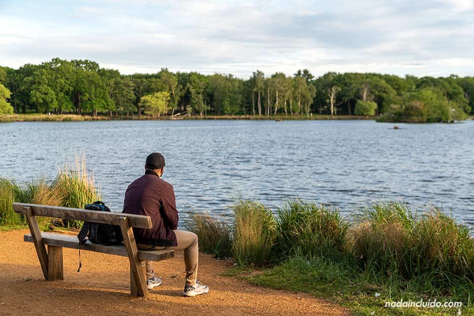 Alguien descansa en un banco del parque Richmond, a las afueras de Londres (Inglaterra)