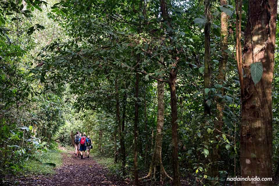 Turistas recorriendo los senderos del parque nacional de Corcovado (Costa Rica)