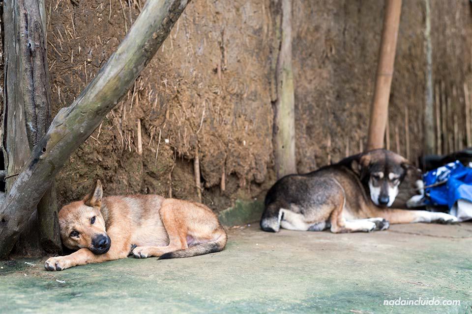 Perros en la aldea de Viet Hai, en la Bahía de Lan Ha (Vietnam)