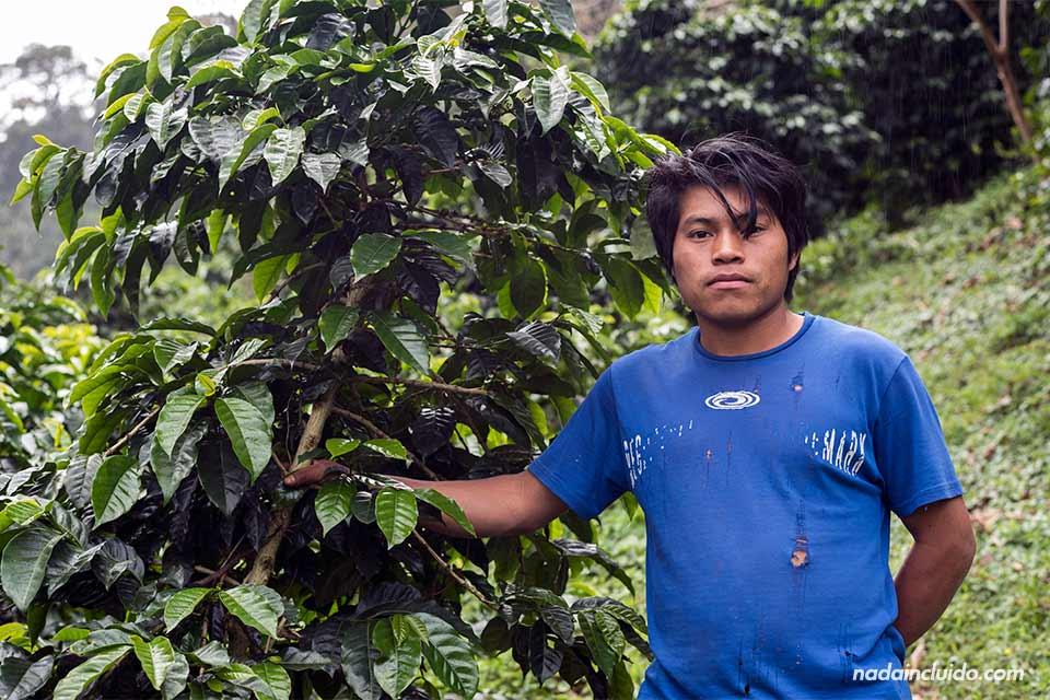 Trabajador de la etnia Ngäbe-Buglé en el cafetal Elida Estate Coffee, en Boquete (Panamá)