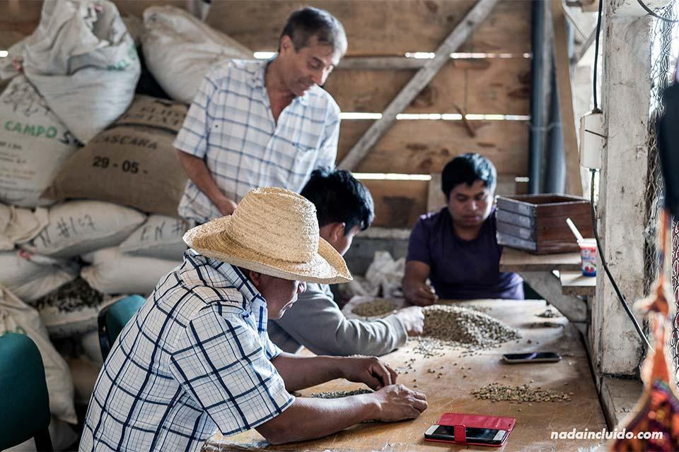 Trabajadores separan semillas de café en el beneficio Elida Coffee Estate, en Boquete (Panamá)