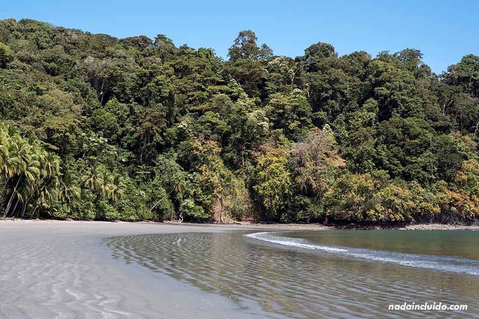 Orilla de una playa desierta en isla Paridas, parque nacional marino golfo de Chiriquí (Panamá)