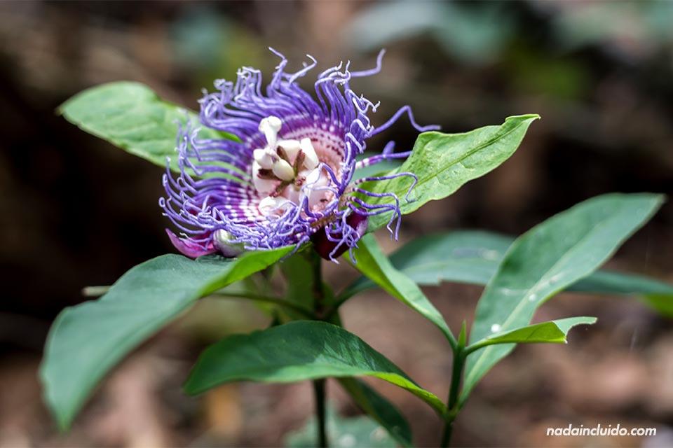 Una flor en el parque nacional de Corcovado (Costa Rica)