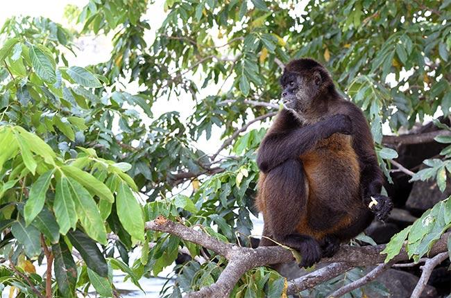 Isla de los monos en las Isletas de Granada (Nicaragua)