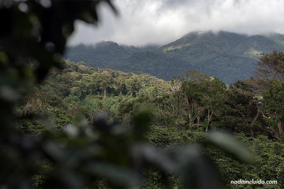 Vistas de los paisajes de Boquete desde Elida Estate Coffee (Panamá)