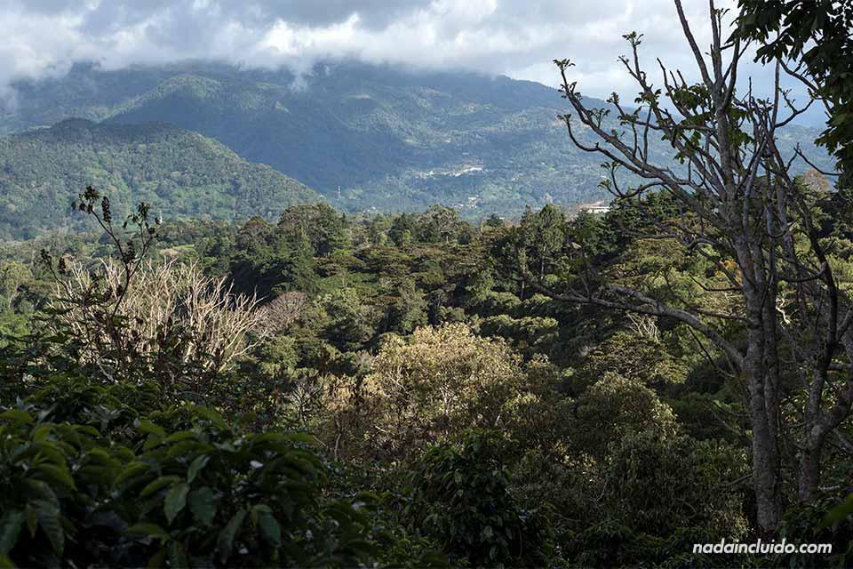 Paisajes de Boquete vistos desde Elida Estate Coffee, Panamá