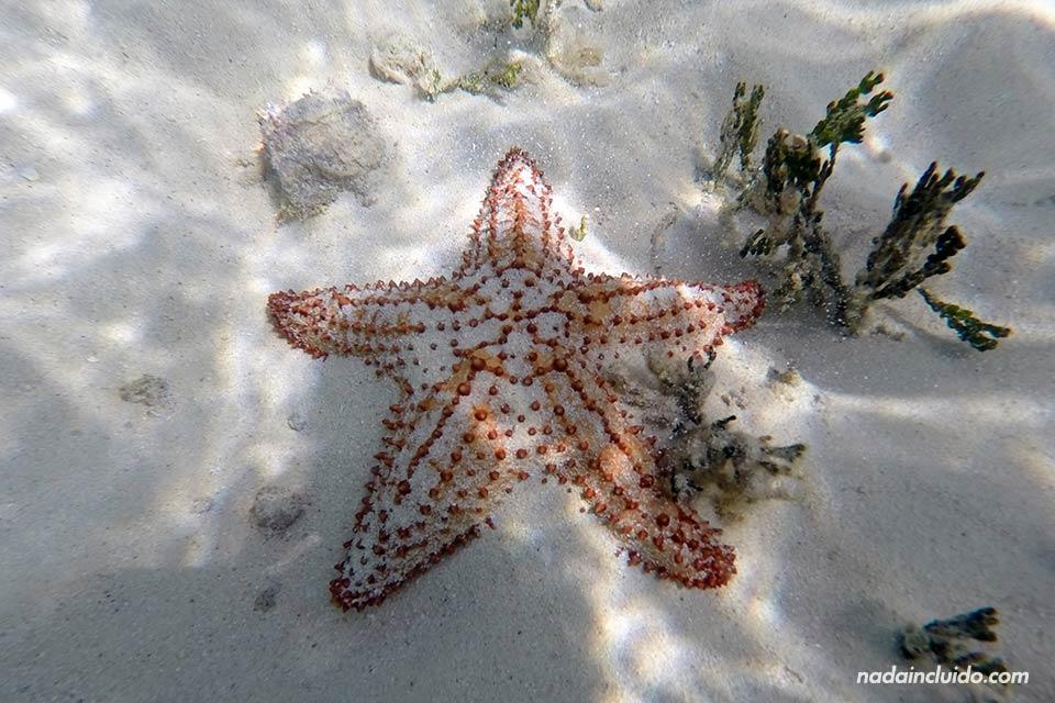 Estrella de mar en el fondo marino del archipiélago de San Blas (Panamá)