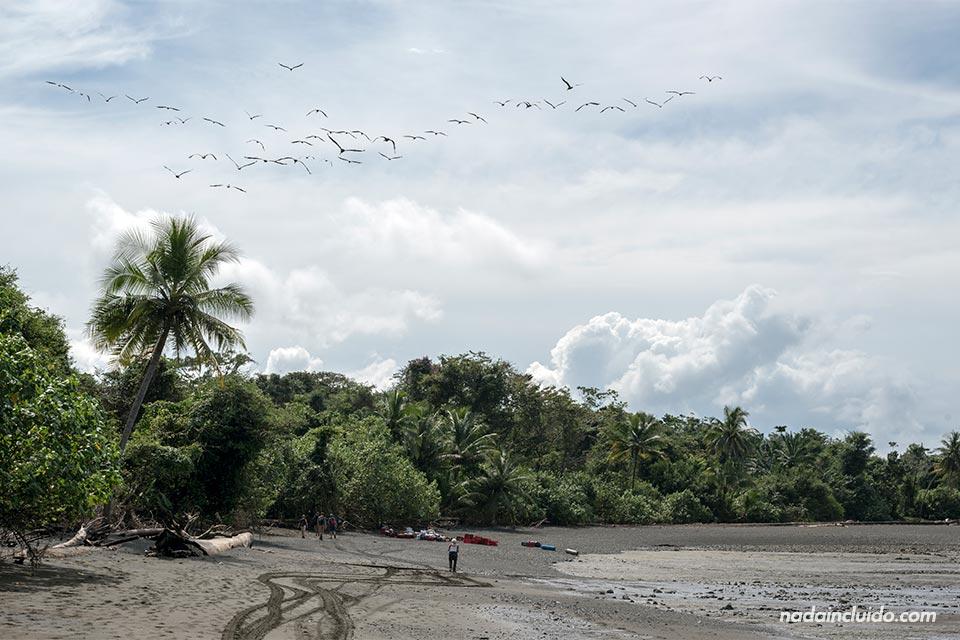 Aves sobrevuelan playa Sirena, parque nacional de Corcovado (Costa Rica)