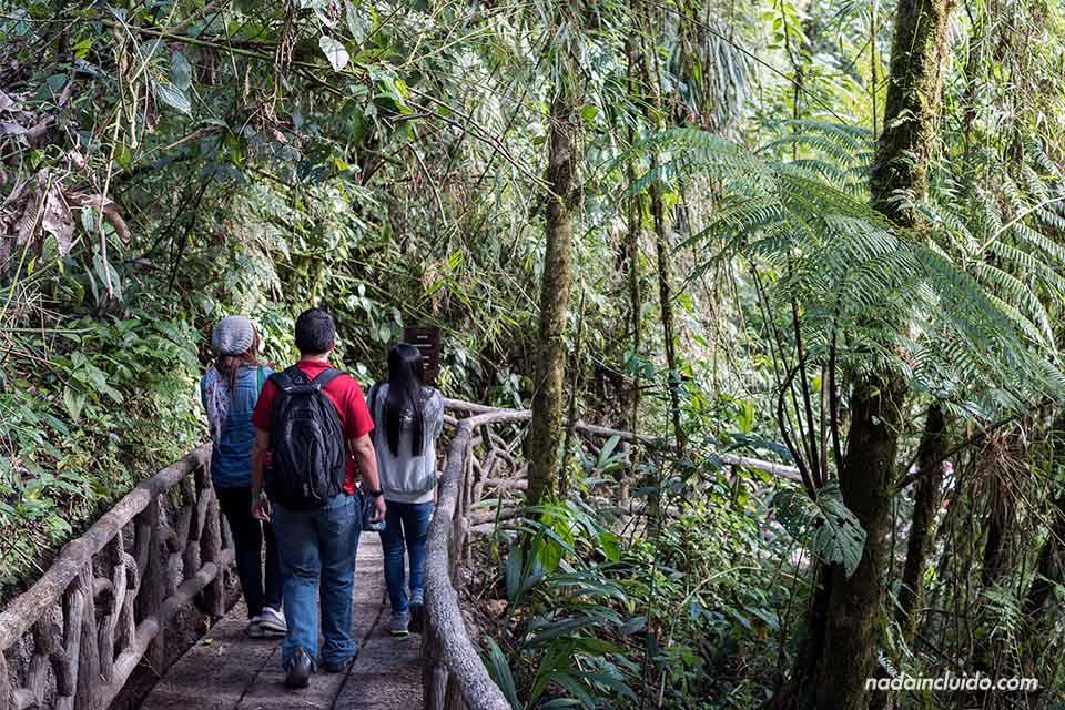 Bajando a la Catarata de la Paz (Costa Rica)