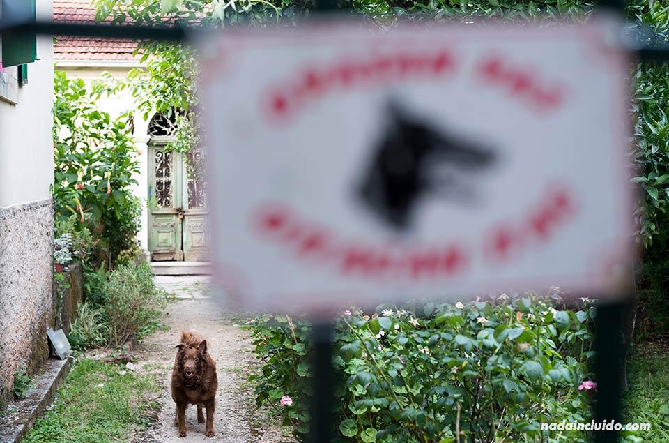 Un perro ladra en la puerta de una casa de Herceg Novi (Montenegro)