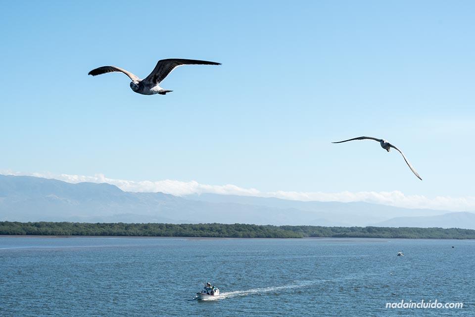 Gaviotas durante el viaje en Ferry de Puntarenas a Paquera (Costa Rica)