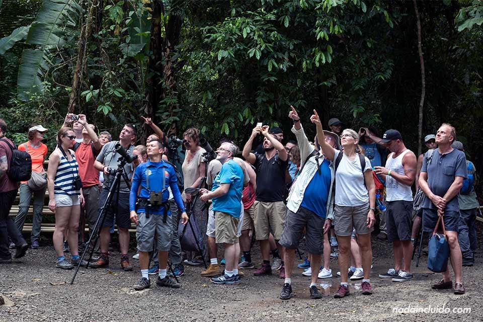 Muchos turistas en los senderos del parque nacional Manuel Antonio (Costa Rica)