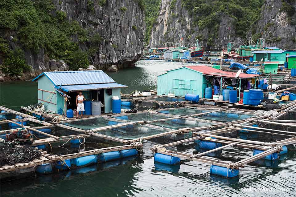 Aldea flotante en la Bahía de Lan Ha (Vietnam)