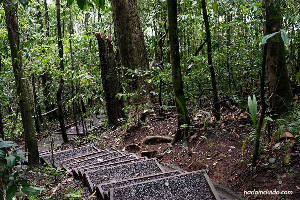 Sendero entre los bosques del parque nacional Manuel Antonio (Costa Rica)