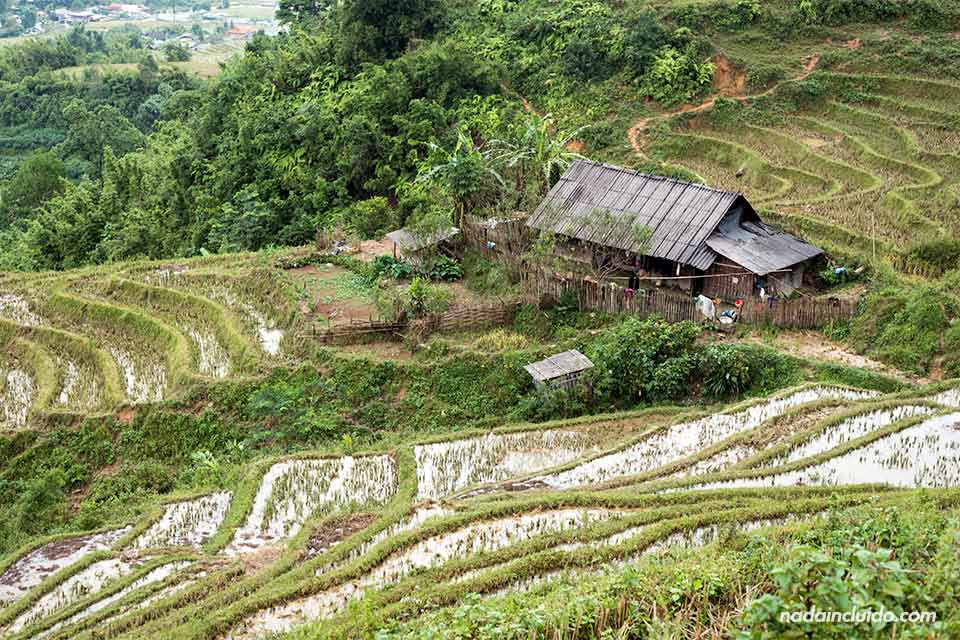 Arrozales en la región de Sapa, provincia de Lao Chai (Vietnam)
