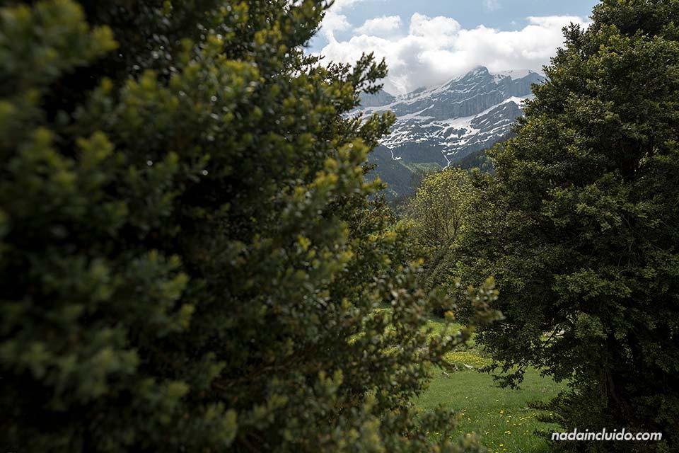 Montaña entre los árboles en el valle de Bujaruelo (Sobrarbe, Aragón)
