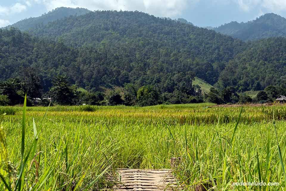 Puente de bambú en Mae Hong Son (Tailandia)